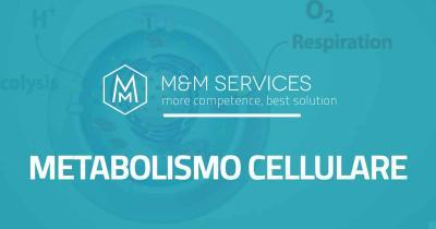 analisi metabolismo cellulare